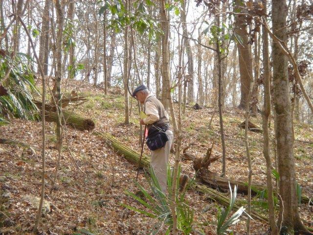Angus by downed Torreya Tree