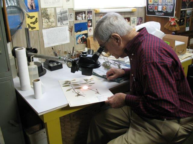 Angus working in his herbarium