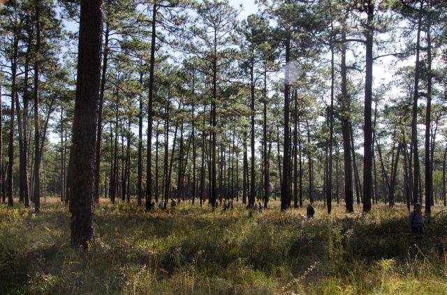 The Big Woods - Greenwood